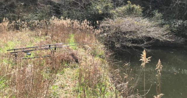 メーターオーバーの鯉が狙える意外な釣り場とは?